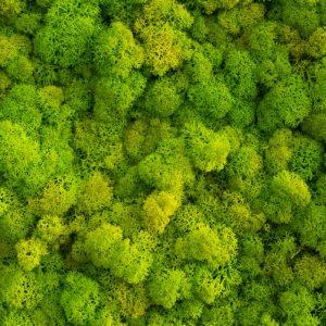 mech zielony limonka4